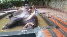 Elefantspa!